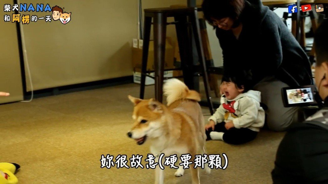 Bo妞被狗狗暴衝嚇哭。圖/聯勤公關提供