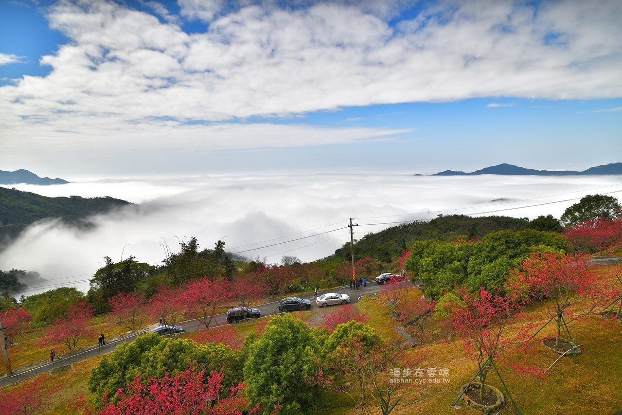 公田彌陀禪寺的櫻花雲海都美。圖/黃源明提供