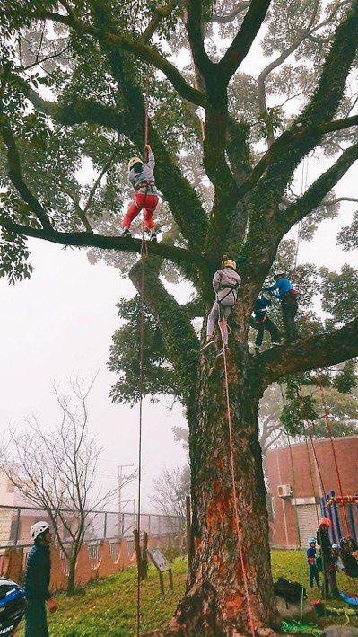 台大實驗林管處安排永興國小學童體驗爬樹,小朋友大喊好有趣。 圖/台大實驗林管處提...