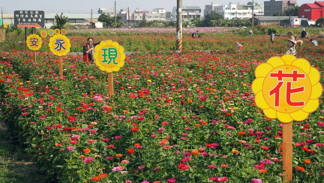 沿海的永安區,今年也廣植花卉,農曆春節期間適合結伴春遊。 記者王昭月/攝影