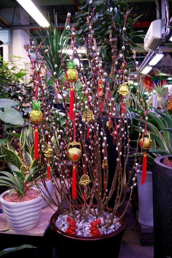 銀柳象徵銀錢萬兩好兆頭。圖╱台北花市提供