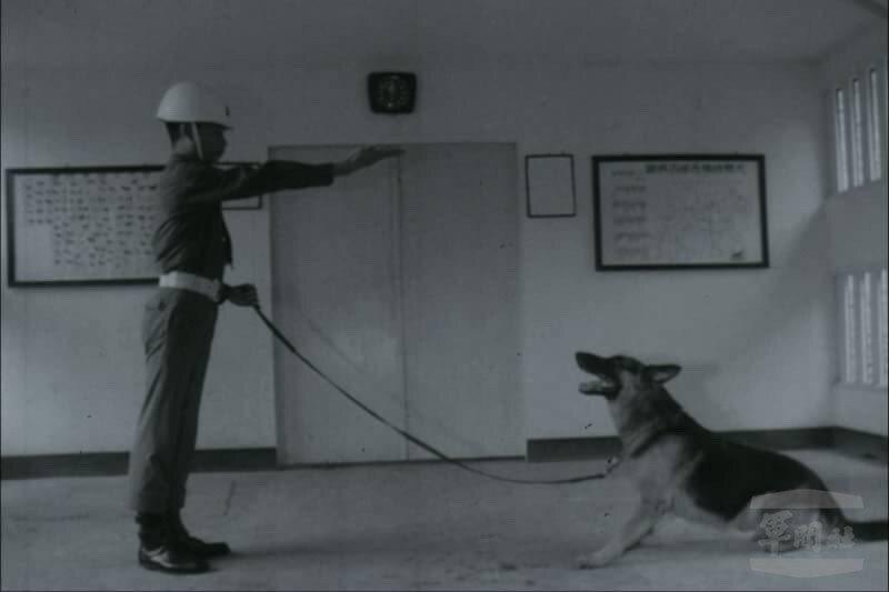 50年代的軍犬訓練。圖/軍聞社