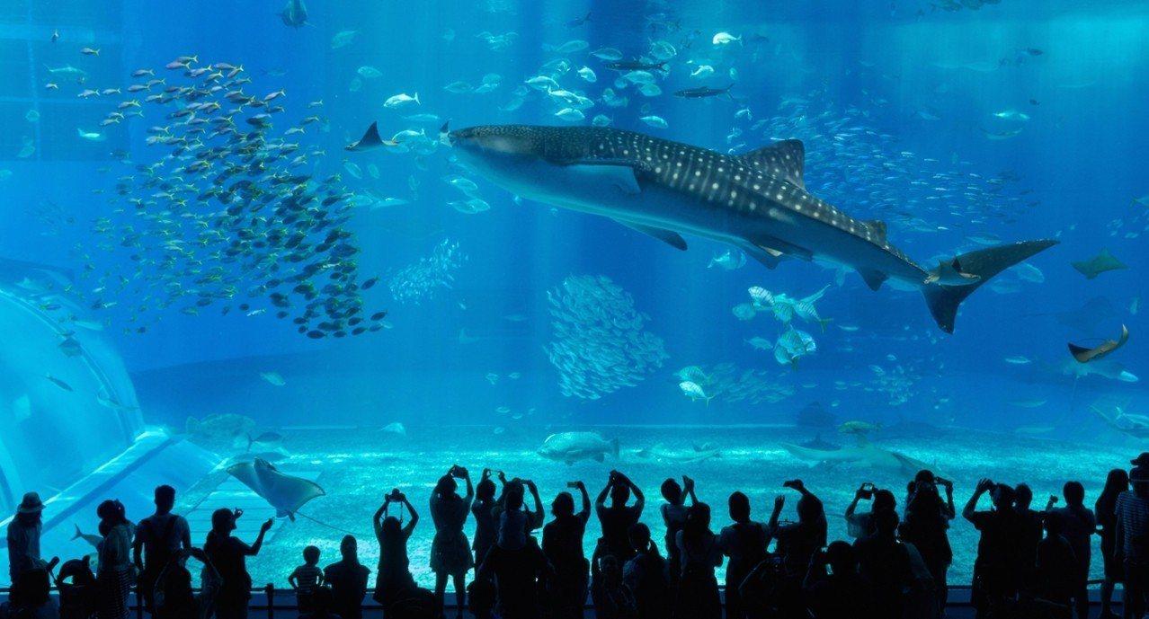 「樂遊沖繩4日」除品嚐魚市嚐鮮,還可走訪人氣水族館。燦星旅遊/提供