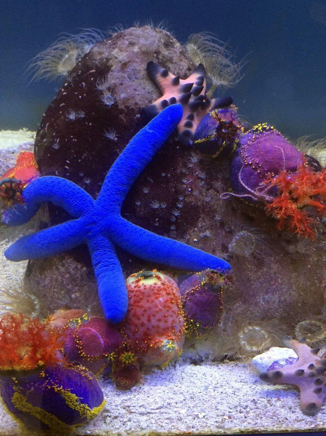 海洋奇珍園內有多種珍奇海洋生物。記者王昭月/攝影