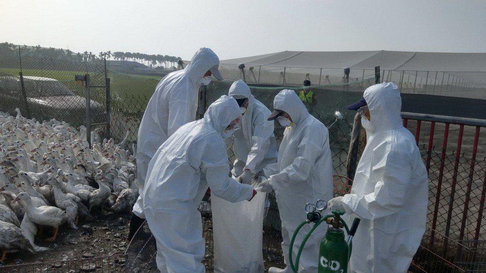 大陸確診全球首例人類感染H7N4禽流感病例,疾管署將密切監測此病毒並分析其基因序列。 圖/聯合報系資料照片
