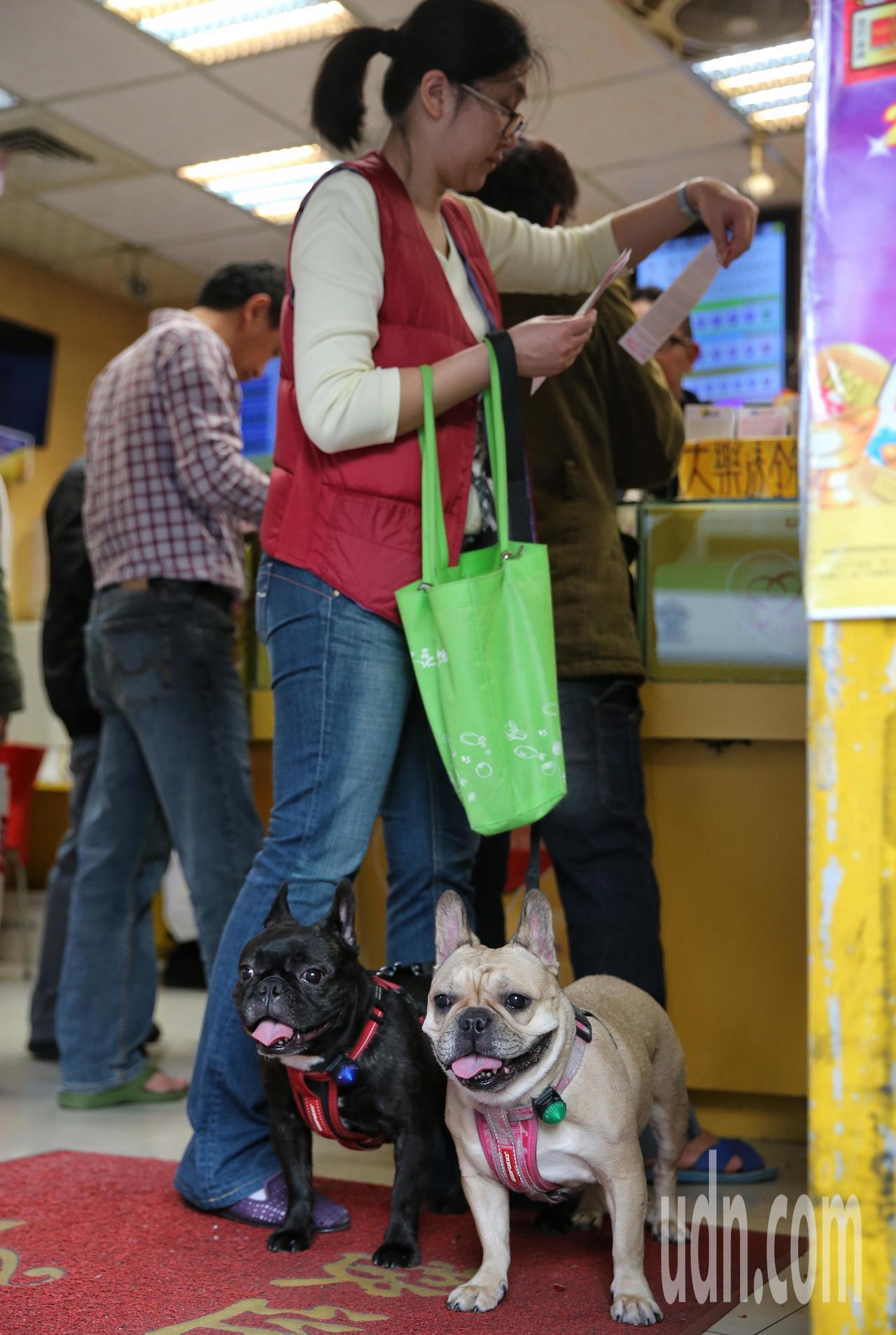 將要迎接狗年,有民眾攜帶愛犬來買彩券衝喜氣。記者鄭清元/攝影