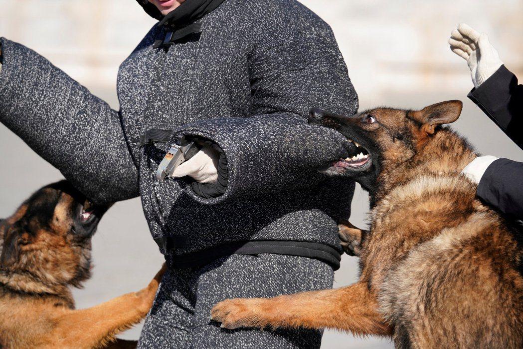 北京故宮前的警犬正在上日常撲咬訓練課。 路透