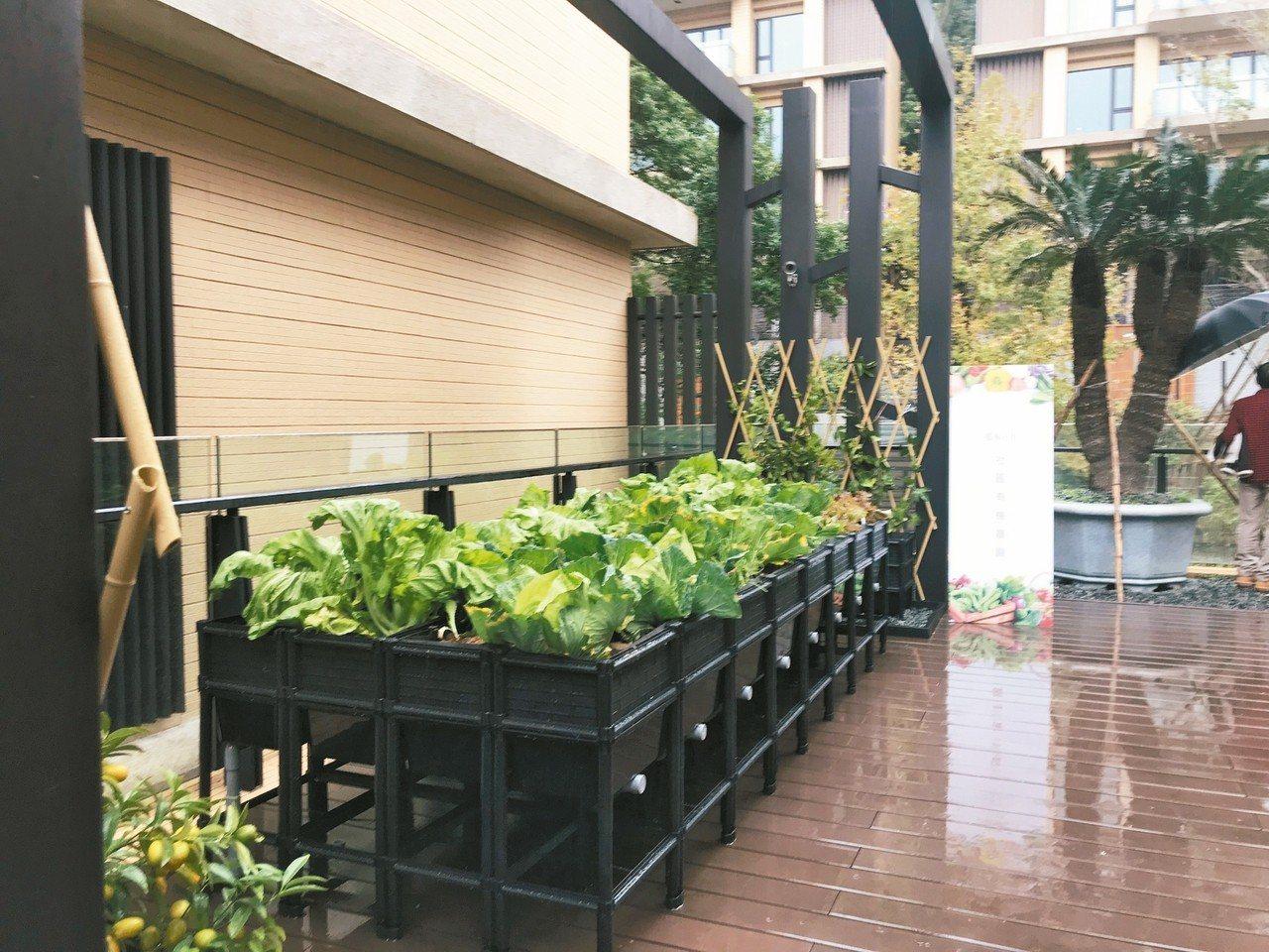 豪宅社區設置有機菜園,請專家定期教住戶種菜。 記者游智文/攝影