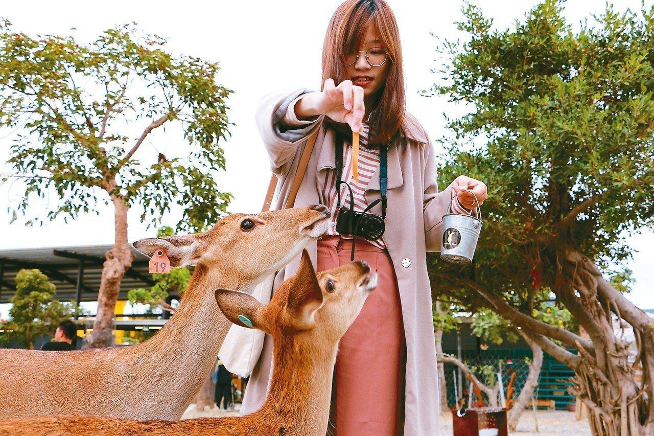 可以選擇鹿米、牧草或紅蘿蔔餵梅花鹿。 記者沈佩臻/攝影