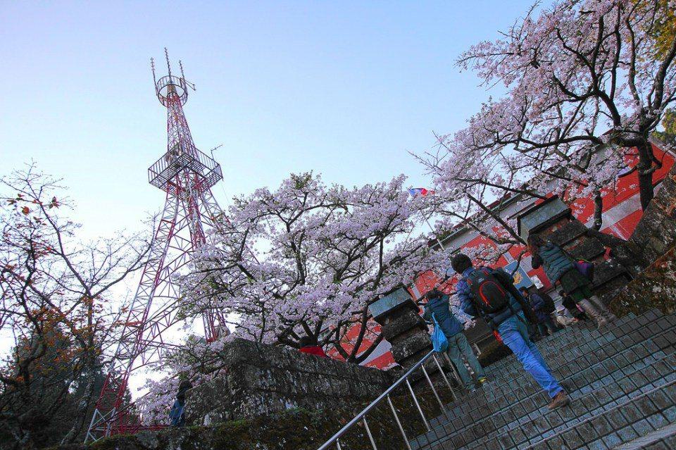 ▲阿里山派出所櫻花。(圖/攝影者:Jerry Lai, Flickr CC Li...