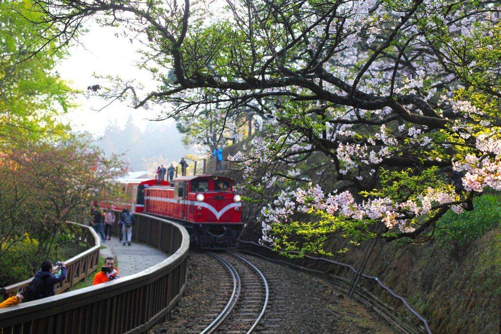 ▲阿里山櫻花鐵道。(圖/攝影者:Jerry Lai, Flickr CC Lic...