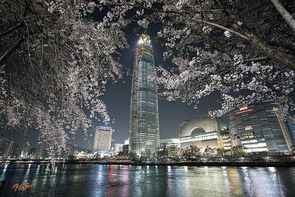 ▲首爾石村湖夜櫻花。(圖/攝影者:flatout_k, Flickr CC L...