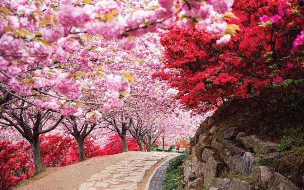 ▲韓國全州-完山公園。(圖/Tripbaa趣吧!達人帶路)
