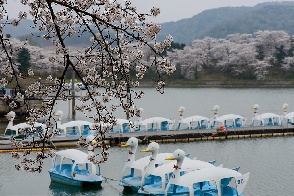 ▲韓國慶州-普門櫻花環湖步道。(圖/Tripbaa趣吧!達人帶路)