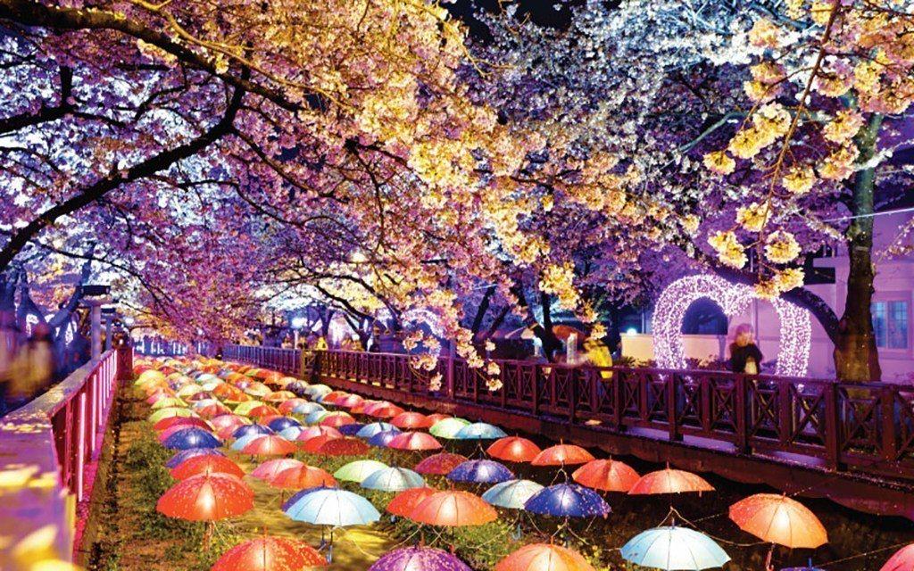▲韓國慶州-鎮海夜櫻景象。(圖/Tripbaa趣吧!達人帶路)