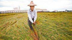 極端氣候頻繁 農民損失黑洞誰來填補