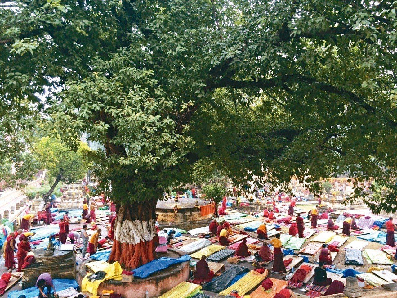菩提迦耶寺裡,僧人們在木板墊上,虔敬地進行皈依大禮拜。