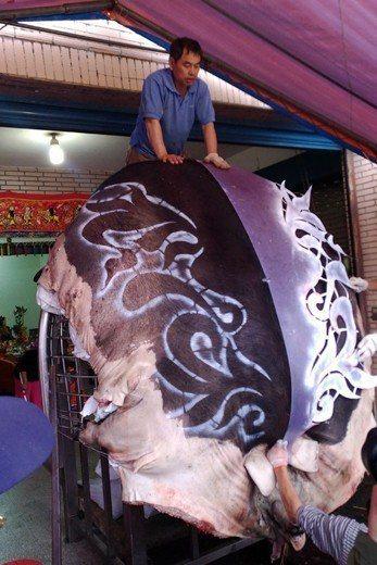 今年三峽祖師廟的特等神豬,在元月初五時正在調整在鐵架上的位置。 圖/作者自攝