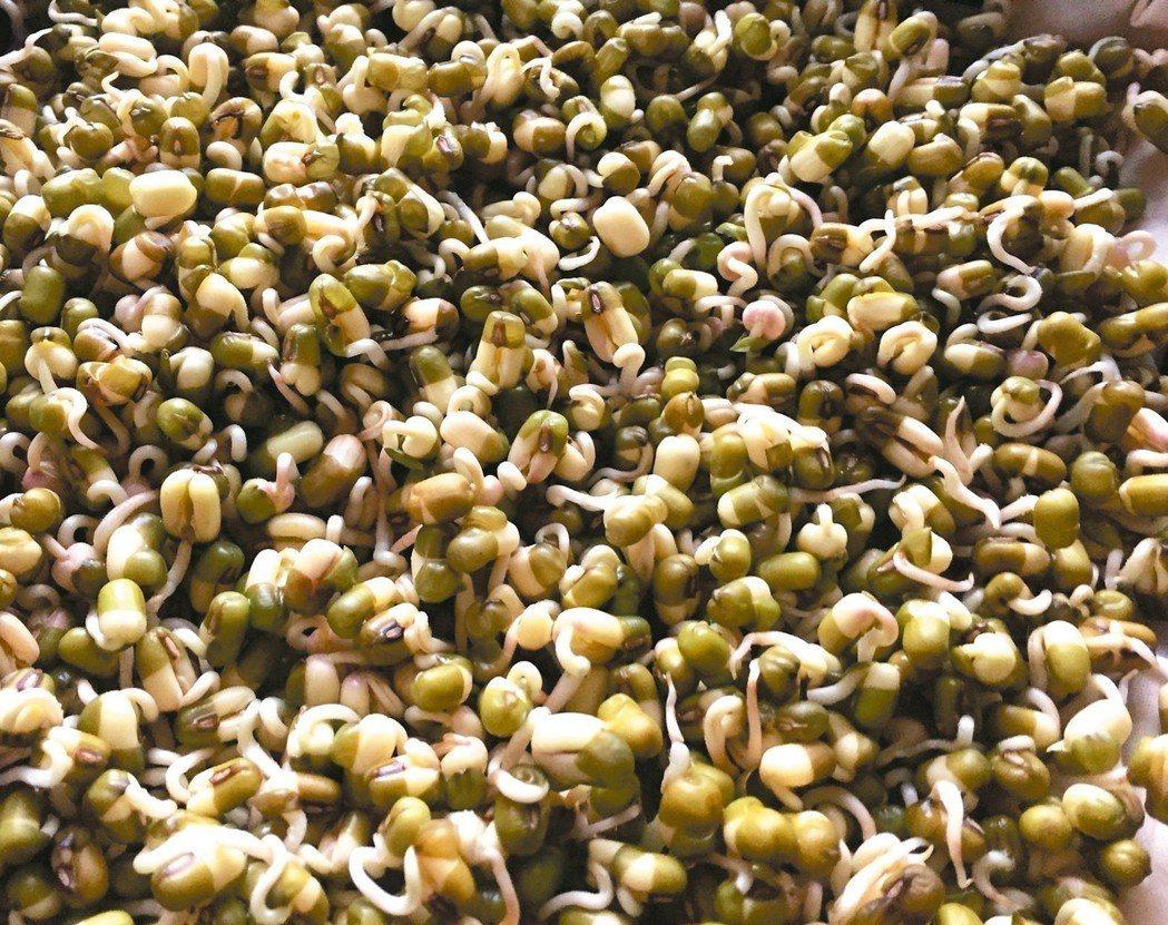 家裡現成的豆子都可以拿來發芽,圖為綠豆芽的生長狀況。 圖/朱慧芳