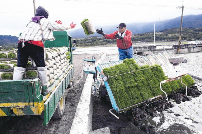 池上進入插秧季節,農民用機器耕作。 記者曾吉松/攝影