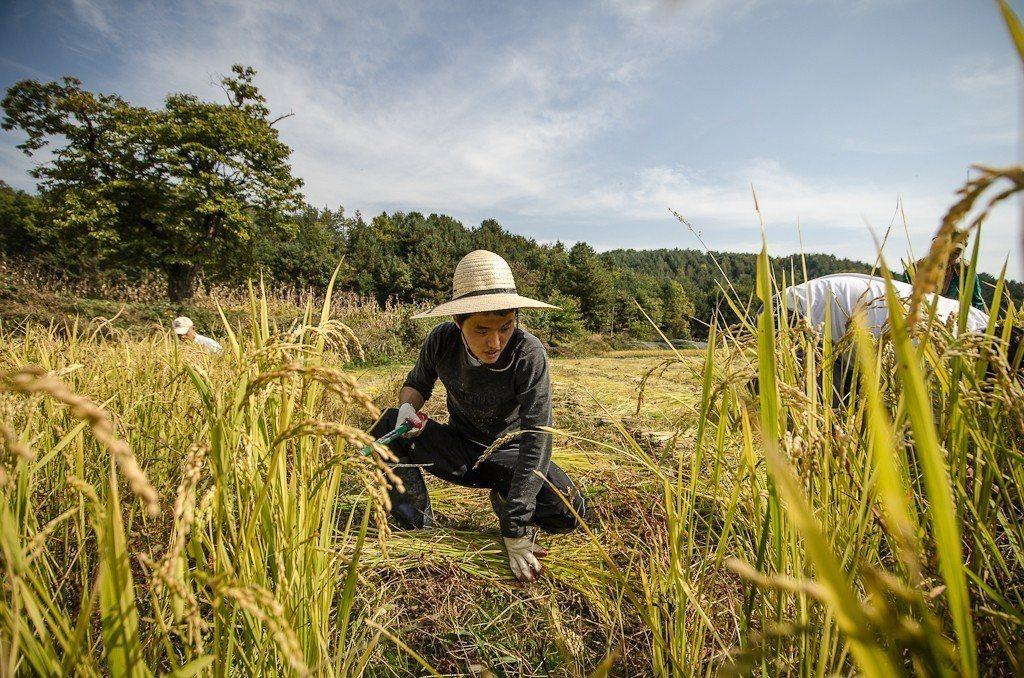 韓國2001年開辦農業保險,也是和台灣一樣,採用商業保險型態,由民間的保險公司來...