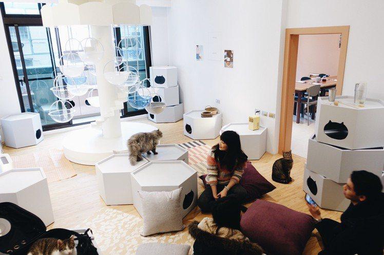 貓的生活提案打造人與貓共同生活的愜意空間。圖/記者沈佩臻攝影