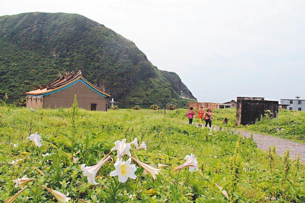 龜山島山頭台灣原生種鐵砲百合盛放。 圖/東北角風管處提供
