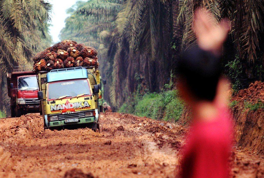 2000年到2011年之間,東南亞每年約有27萬公頃的熱帶雨林被砍伐轉種植油棕。...