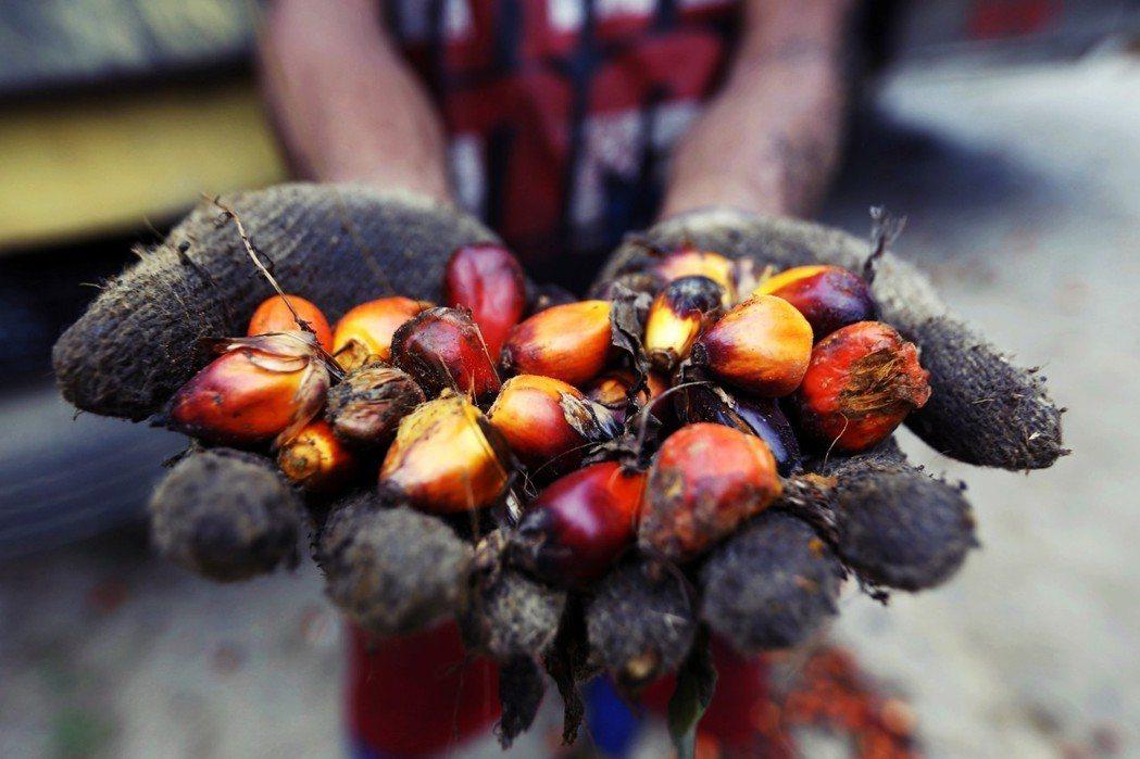 從油棕果肉提煉出的「棕櫚油」,是目前全球最廣泛使用的植物油;從果核提煉出的「棕櫚...