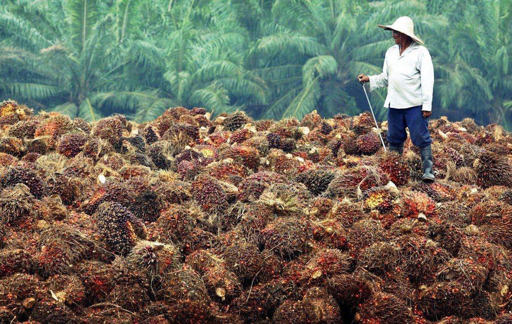越多的植物油消費需求,就需要更多的土地和資源使用,產生更多的汙染。圖為馬來西亞的...