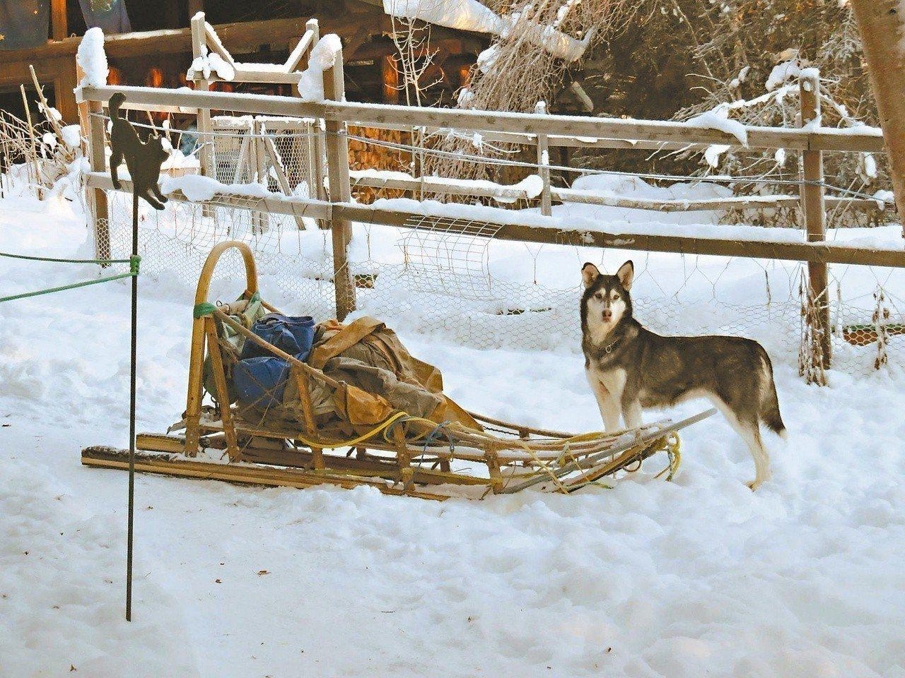 一提到工作犬,多數人都想到純種四十五公斤級的阿拉斯加馬拉穆犬,其實真正的工作犬不...