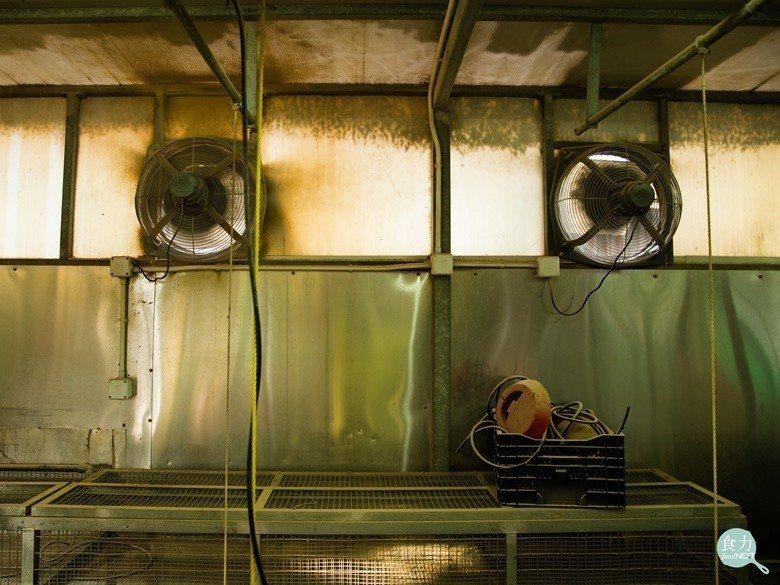 郭銘祥在養雞場加裝不少抽風扇,雞舍設有良好的通風系統,確保空氣流通。(攝於香港康...