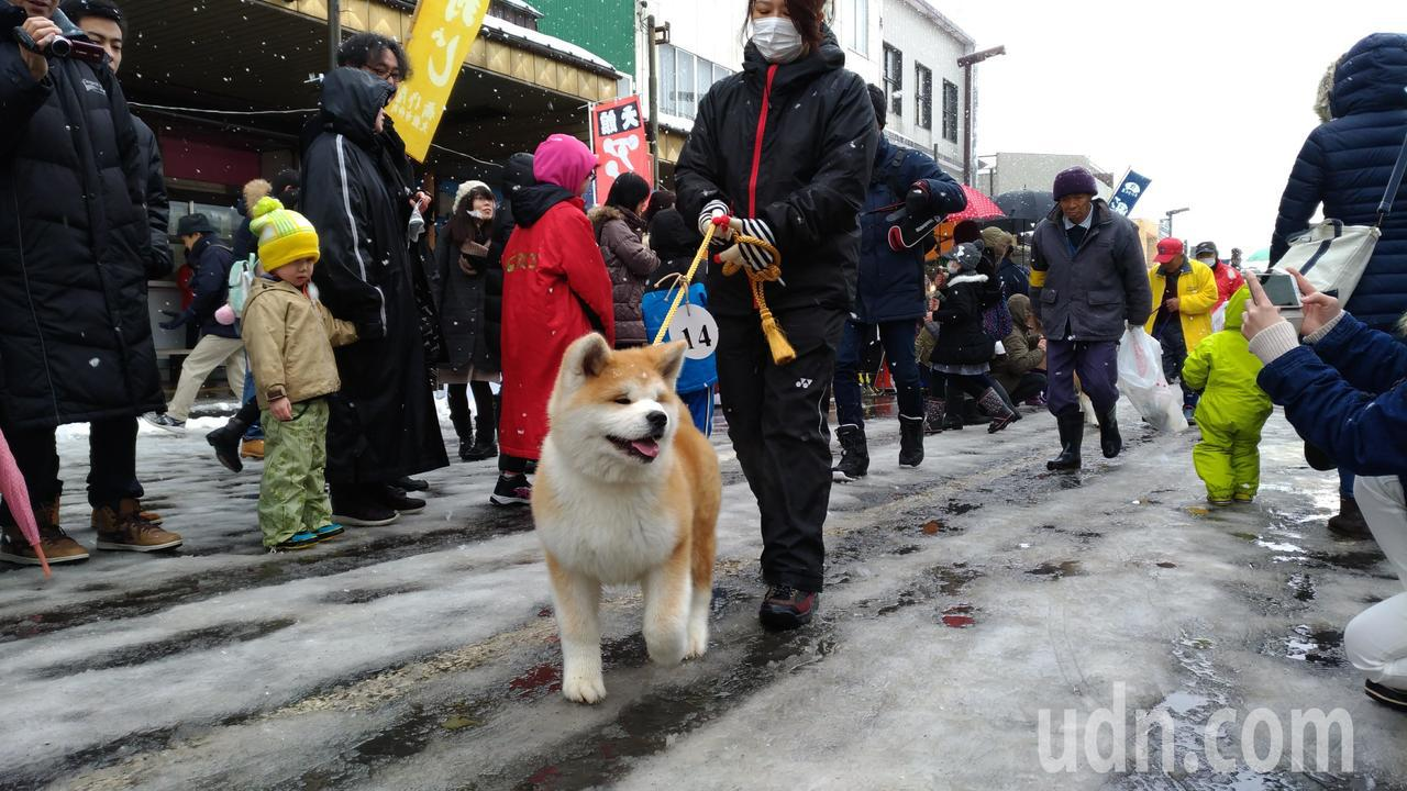 秋田犬。聯合報系資料照片/記者楊德宜攝影