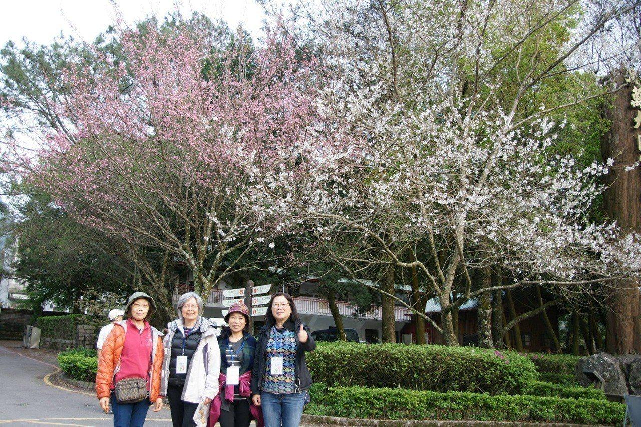 奧萬大與梅峰農場合辦「春饗舞櫻」生態遊程,透過專業環境教育帶民眾感受春季脈動。圖...