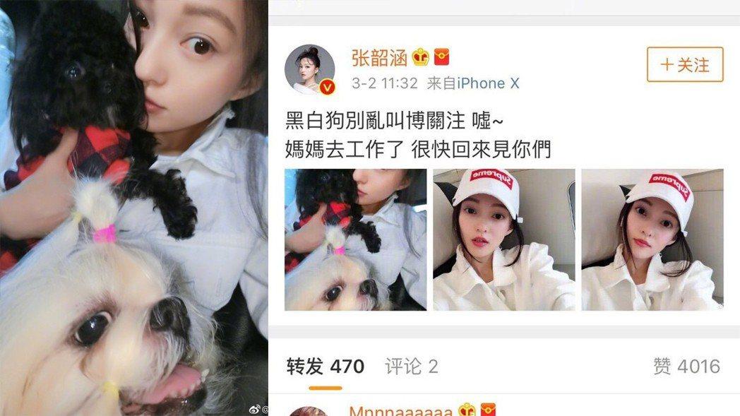 張韶涵抱兩隻狗發文,被懷疑在暗酸黑人、范范。 圖/擷自微博
