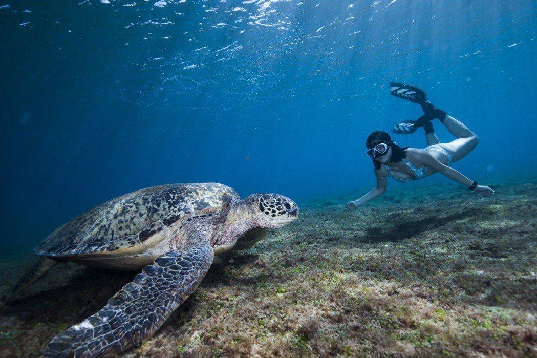 這隻名為R36192的綠蠵龜,家鄉遠在3000公里外的烏利西環礁。圖/馮加伶提供...