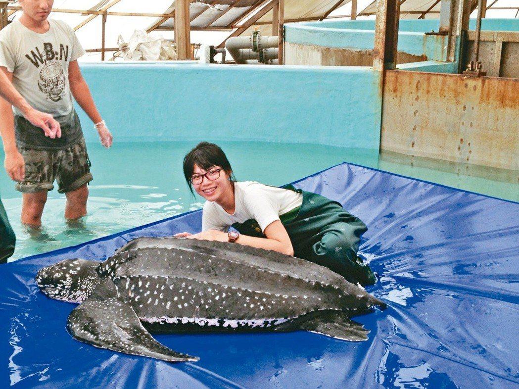 革龜是世界上最大的海龜。圖/馮加伶提供