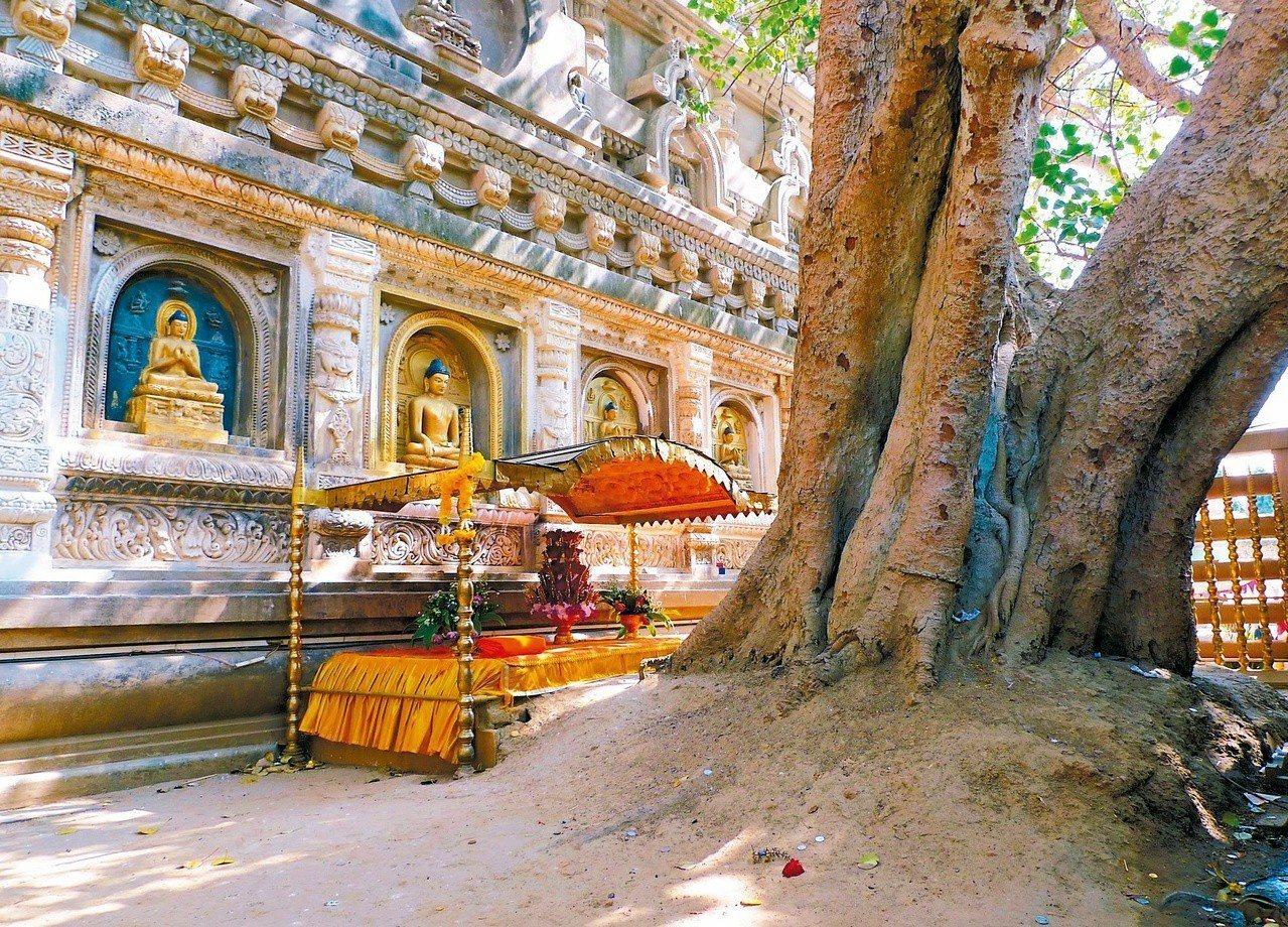 摩訶菩提塔後,金剛座,佛祖悟道的菩提樹下。