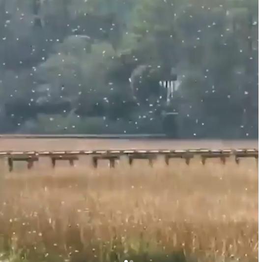 外景地昆蟲滿天飛,讓人有點怕怕。圖/摘自instagram