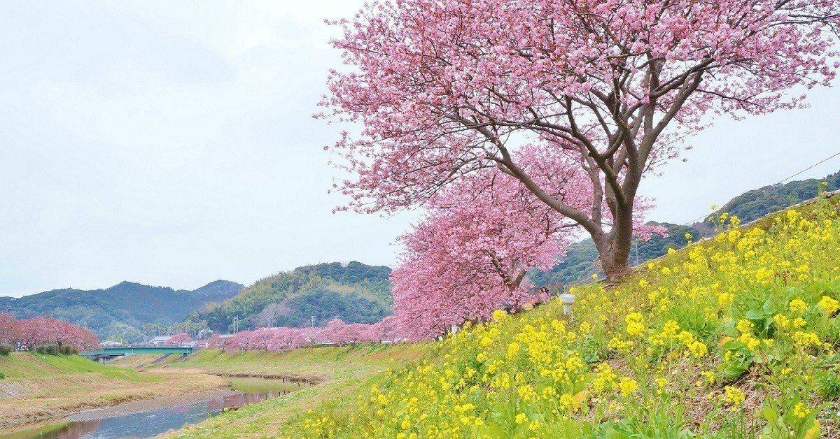 河畔賞櫻。圖/Hotels.com提供
