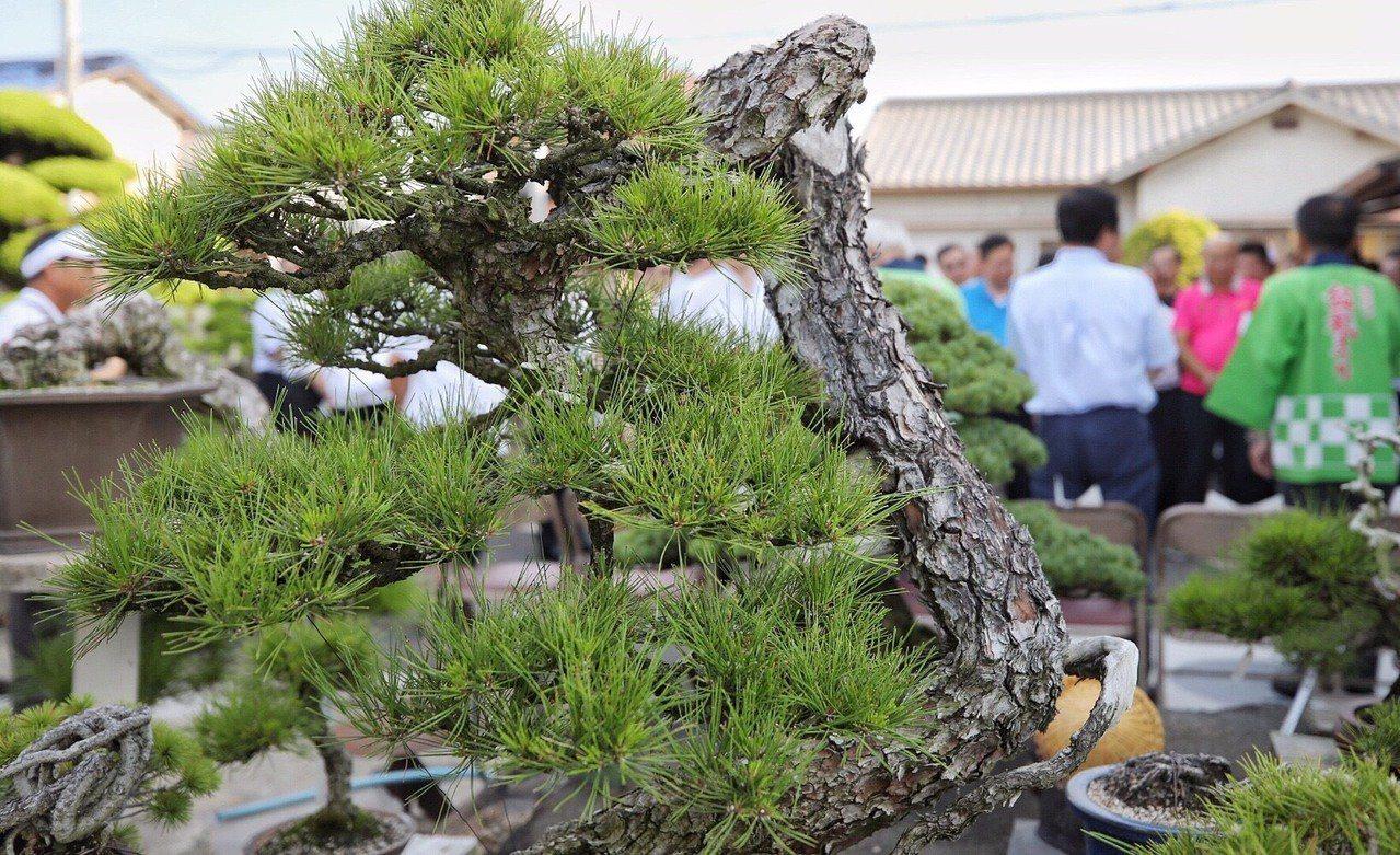 桃園市長鄭文燦去年曾率團到日本香川參訪,當時曾參觀「神高松壽園」欣賞各式盆栽,今...