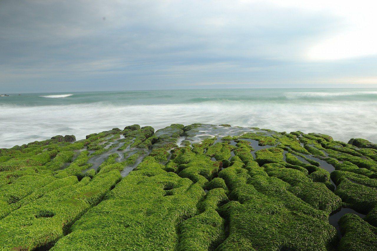 海藻目前已經佈滿老梅石槽,正是賞景的極佳時刻。圖/網友邱子桓提供