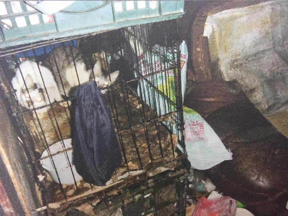 死者與家人因撿拾資源回收,導致居住環境髒亂不堪,為了抓老鼠還養了數隻貓。記者張雅...