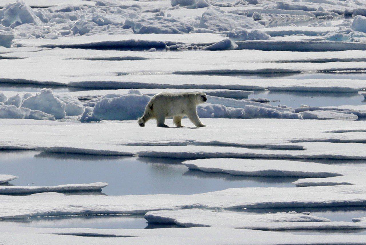 中美俄三大咖正在發動一場「新冷戰」,圖為海冰上的北極熊。(圖/美聯社)