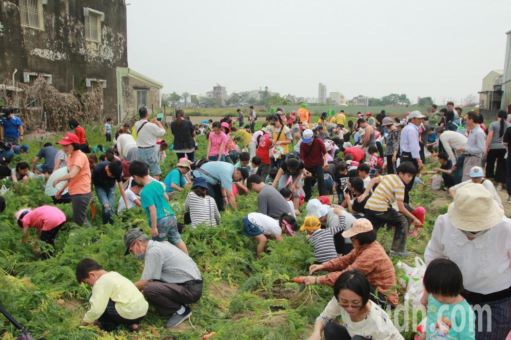 台南將軍農會舉辦胡蘿蔔產業活動,還有親子下田拔蘿蔔,眾人不亦樂乎。記者謝進盛/攝...