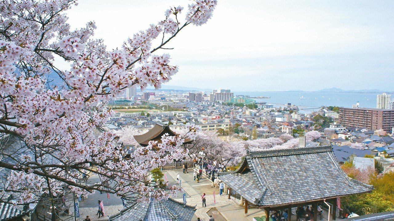 從三井寺的高點俯瞰櫻花盛開之美。 圖/有行旅提供