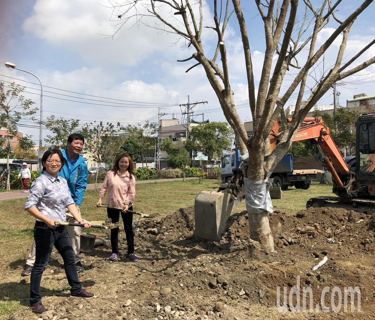民進黨台中市議員張雅旻(左)昨與媽媽、潭子區東寶里長林銘泉(中)一同移植楓樹,希...