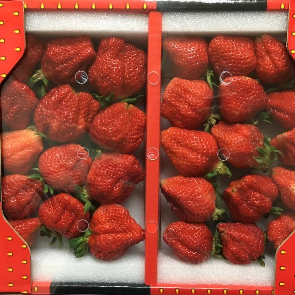 網友買了大湖草莓,發現裡頭竟然有蟲。圖/轉載自臉書社團Costco好市多 商品經...