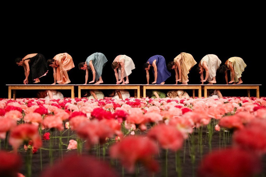 碧娜鮑許經典舞作《康乃馨》,舞台上佈滿數千朵粉色系的康乃馨。圖/兩廳院提供