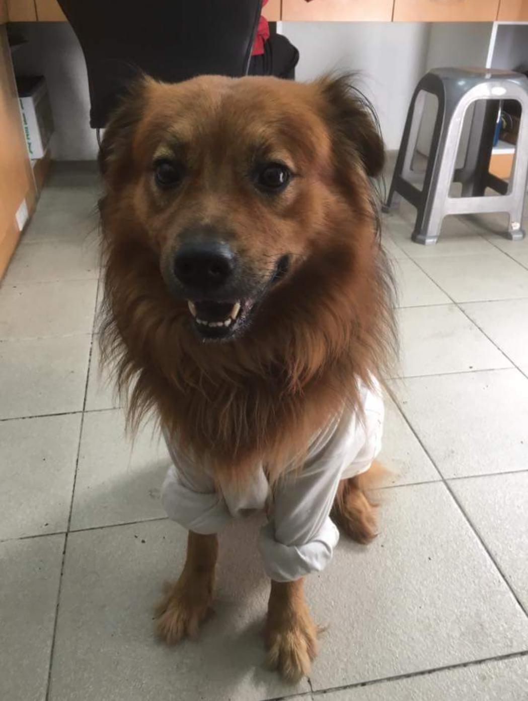 不少消防分隊都有「隊犬」,台北市龍山消防分隊的「阿肥」深受疼愛,就像消防員的家人...